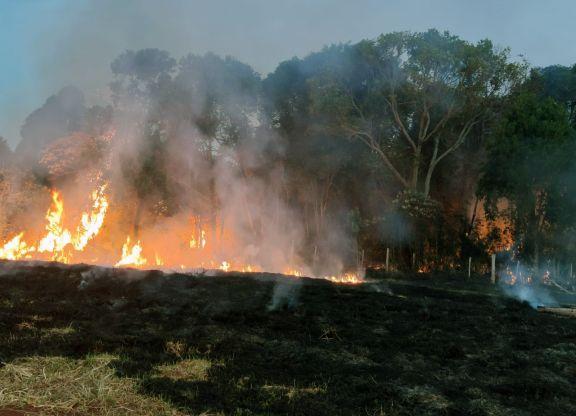 San Pedro: registran más de diez focos de incendios forestales en los últimos días