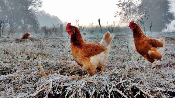 Un frío que pone la piel de gallina