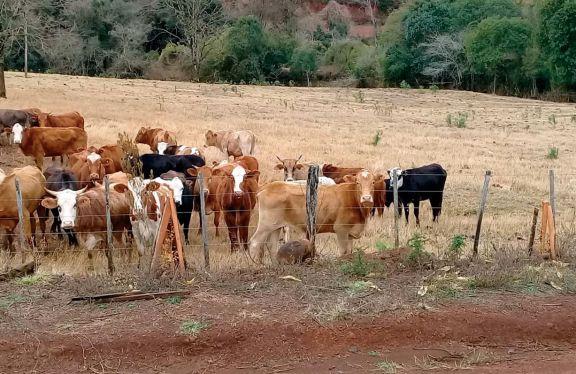 Producción láctea, con fuerte baja por sequía y heladas