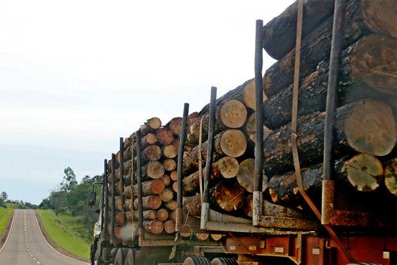 Perfilan gestiones para ampliar superficie de bosque cultivado