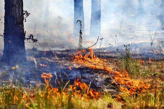 Casi 300 incendios en 10 días y desfavorable panorama por la sequía