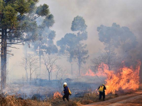 Tragedia ecológica en San Pedro: está en llamas el parque provincial Araucaria