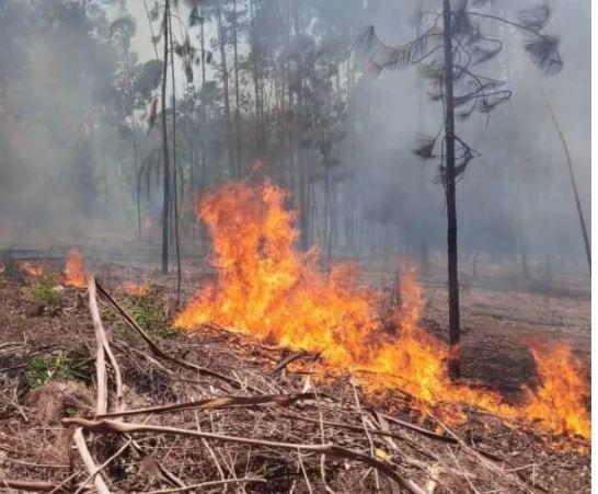 Por alto riesgo de incendios en Campo Ramón recuerdan la prohibición del uso del fuego