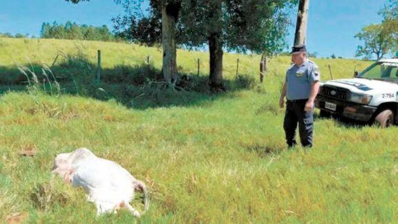 Observan baja en delitos rurales tras presencia policial