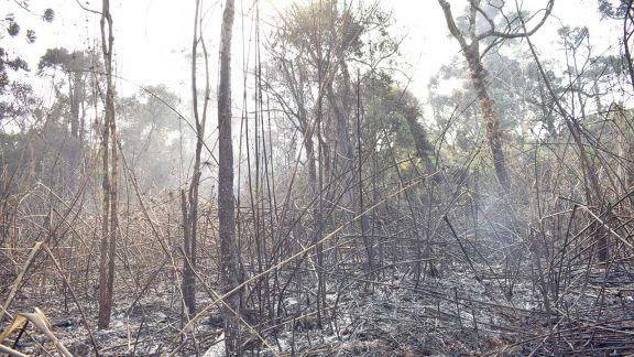Se quemaron casi 6 hectáreas del Parque de la Araucaria