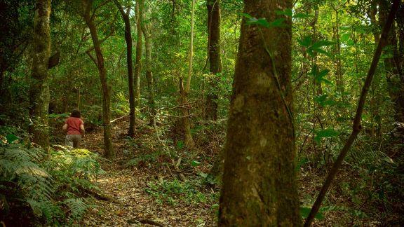 La importancia de cuidar la vegetación que sostiene a los cerros