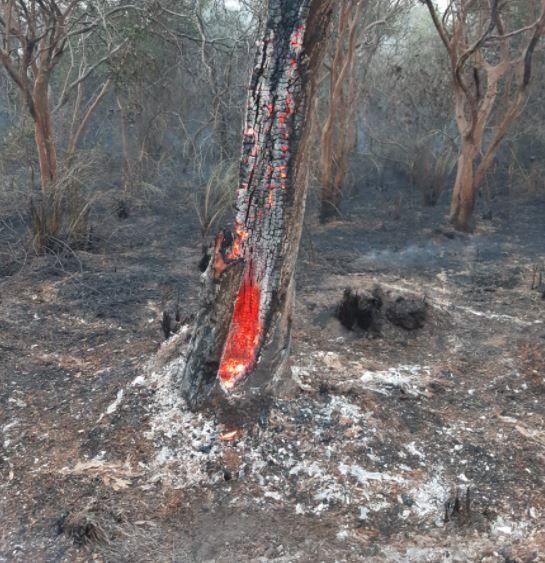 Puerto Iguazú: incendio dejó en evidencia tala indiscriminada y puso en riesgo 8 hectáreas de monte