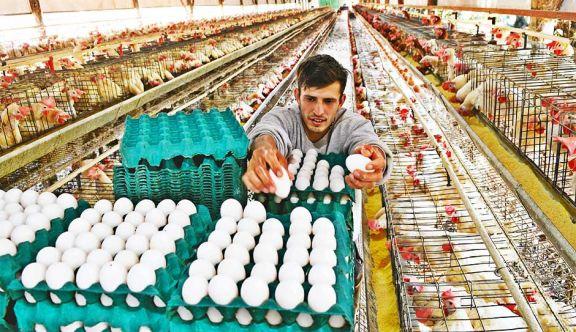 La granja campeona en producción de huevos