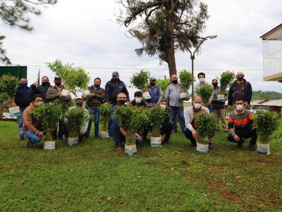 Plantines de eucalipto para productores de El Soberbio