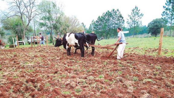 Instalaron sistemas agroforestales sostenibles en chacras de San Pedro