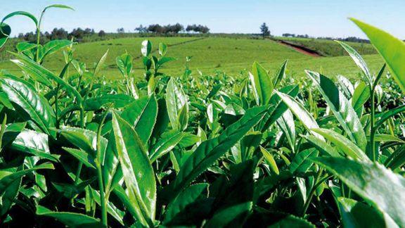 Consultas por fertilizantes siguen a pesar de las subas