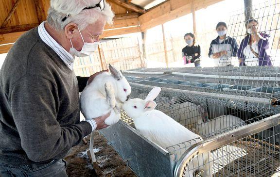 Original iniciativa de cría de conejos en la provincia