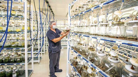 Biofábrica se amplía  y suma proyectos de multiplicación de  plantines y bioinsumos