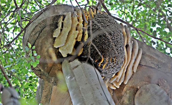 Ataques de abejas, un peligro que aumenta en cada primavera