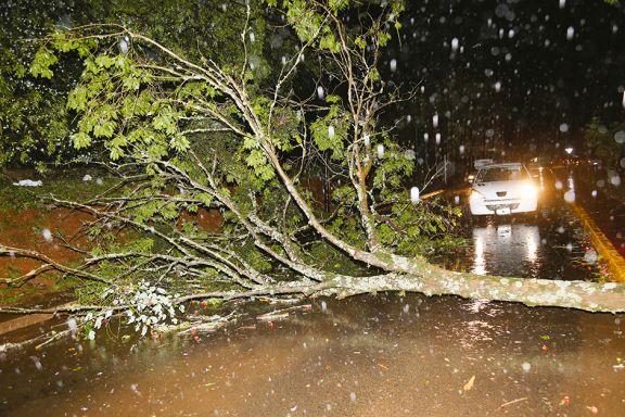 Caída de árboles y voladura de techos y chapas por el temporal