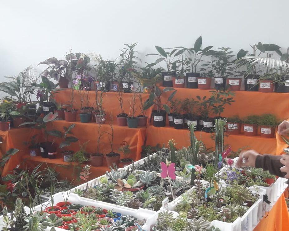 Eldorado: inauguraron el Mercado Concentrador Zonal