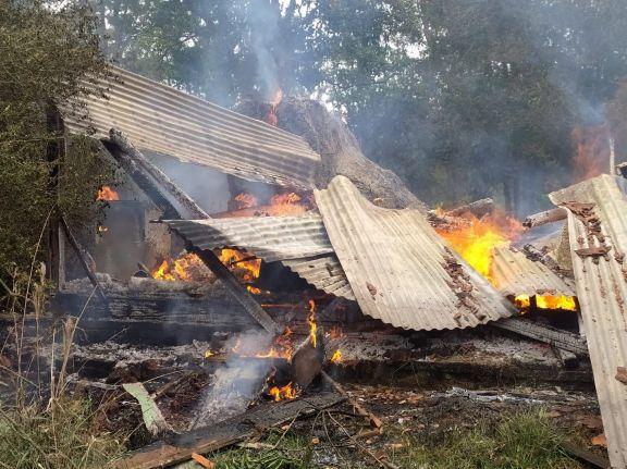 Pretendían espantar con fuego un enjambre de abejas, terminaron incendiado todo