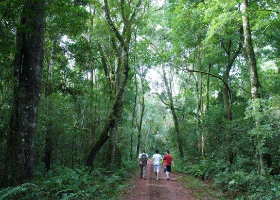 Alertan que Misiones en 2022 recibiría menos de lo que le correspondo por la ley de bosques