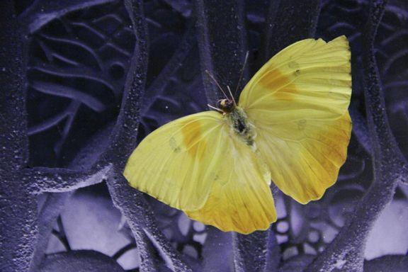 Tramas y  mariposas