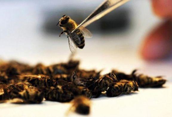 """Ataque de abejas: """"lo importante es actuar con rapidez para sacar los aguijones"""""""