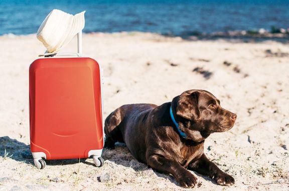 Turismo Pet Friendly una tendencia en crecimiento