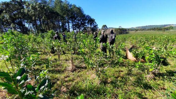 Detuvieron a una persona por robo de yerba mate en Montecarlo