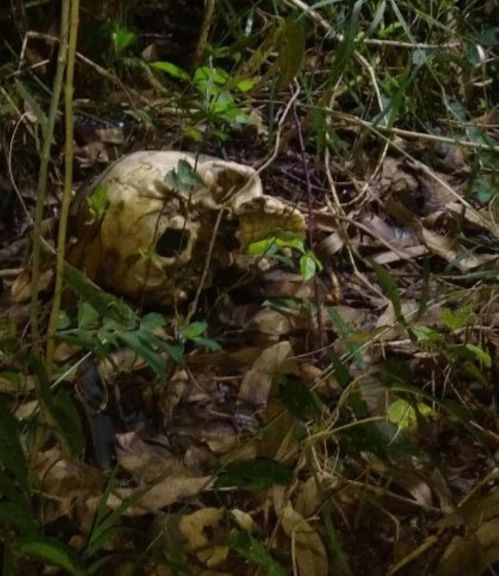 Hallaron restos óseos detrás de una estación de servicio en Posadas