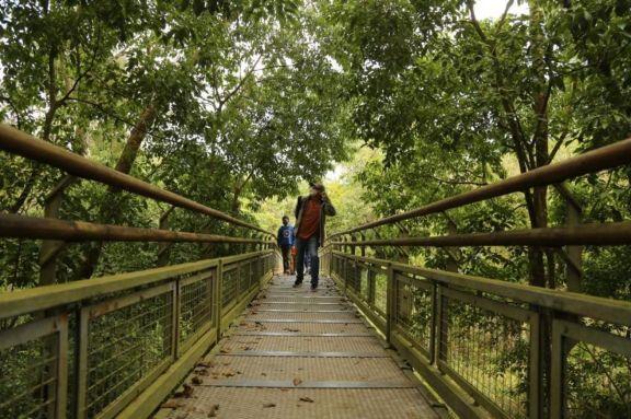 Aparecen casi a diario yaguaretés y pumas en el Parque Nacional Iguazú