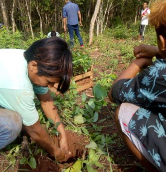 Plantaron mudas de árboles frutales en la comunidad Yryapú