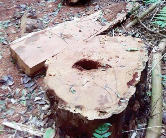 Denuncian desmonte en la reserva de la aldea Mbororé