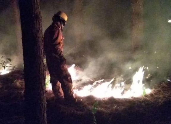 Incendio forestal consumió dos hectáreas en Libertad