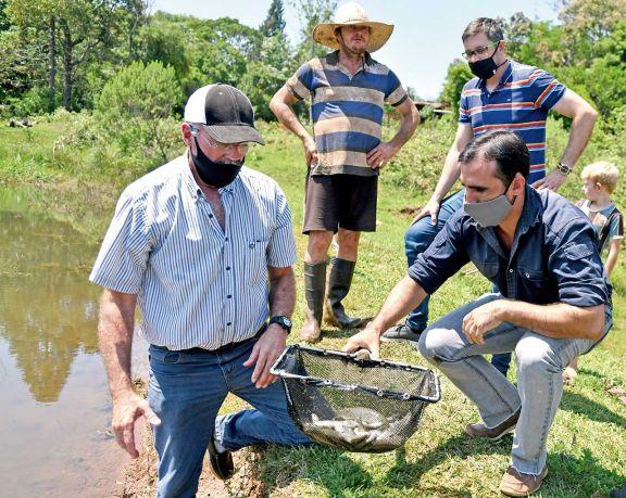 Con énfasis en los rendimientos, la cría de peces avanza en las chacras misioneras