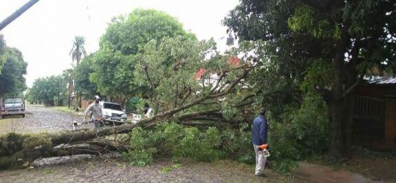 El temporal causó cortes de luz y voladura de techos en Posadas