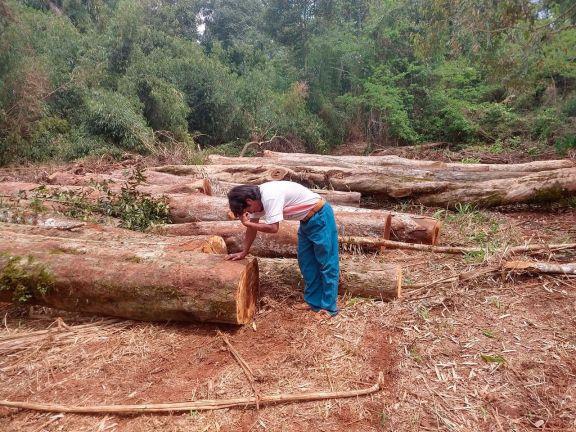 Comunidades mbya impulsan acciones para el cese de la tala