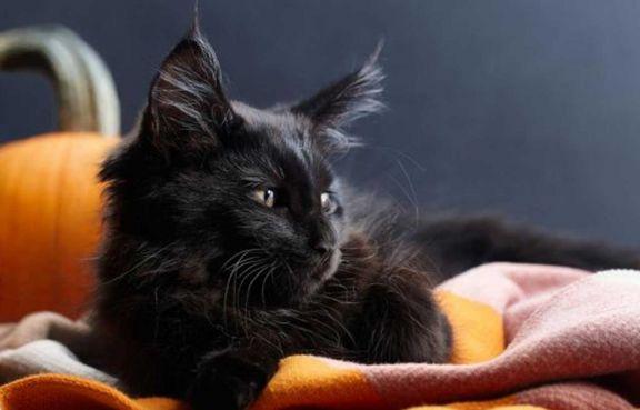 Protectoras en alerta sobre sacrificio animal por Halloween