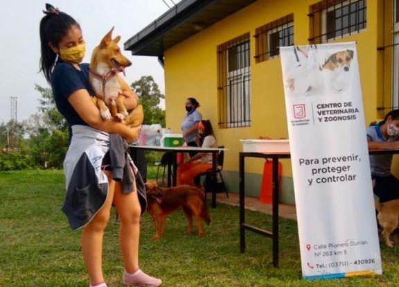El Centro de Zoonosis de Eldorado vacunó a más de 8500 mascotas