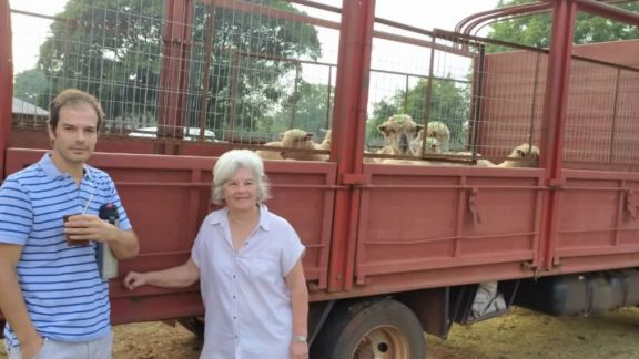 En marcha circuito para que productores puedan faenar ovejas en el frigorífico de San José