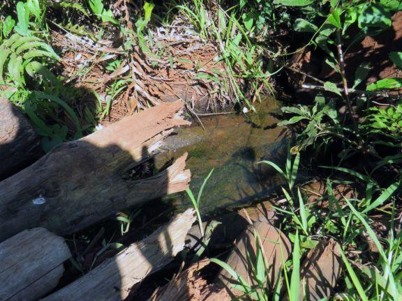 La sequía pega fuerte en el sector rural de Puerto Libertad