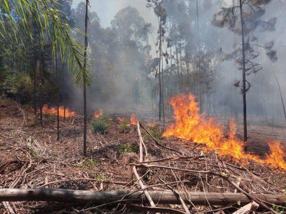 Oberá: Prendieron fuego una zona de monte y apedrearon a los bomberos que intervinieron para apagarlo