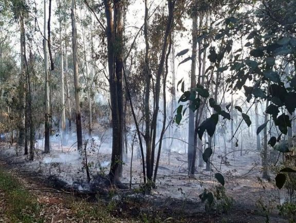 El fuego arrasó 30 hectáreas en Colonia Oro Verde