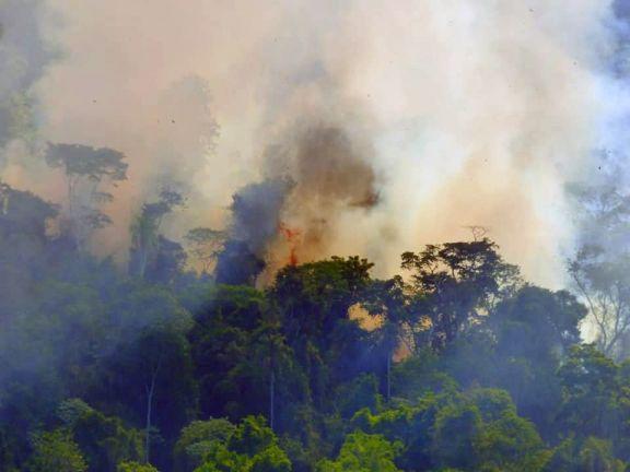 """Incendio en Yabotí: """"El valor que se pierde en lo económico, ambiental y ecológico es muy alto"""""""