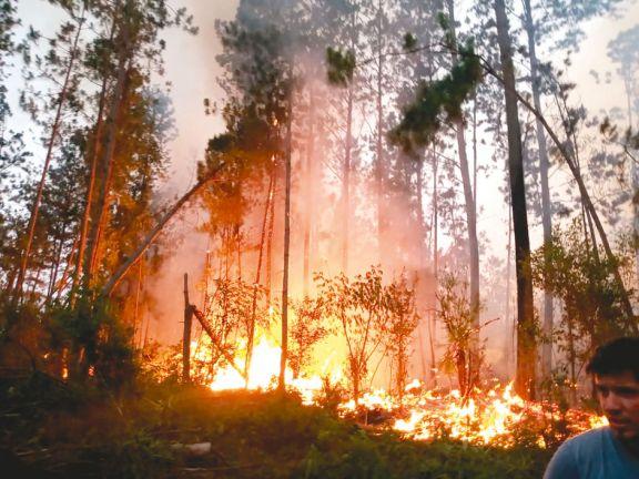 Los incendios forestales crecen y se teme que afecten viviendas