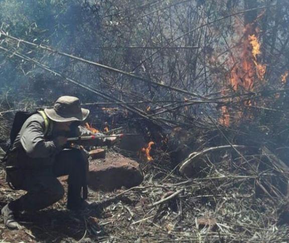 Avanza el fuego en la Biosfera Yabotí y esperan llamas de grandes magnitudes
