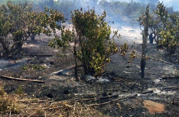 La lluvia trajo alivio pero las pérdidas son enormes en zonas rurales afectadas por el fuego