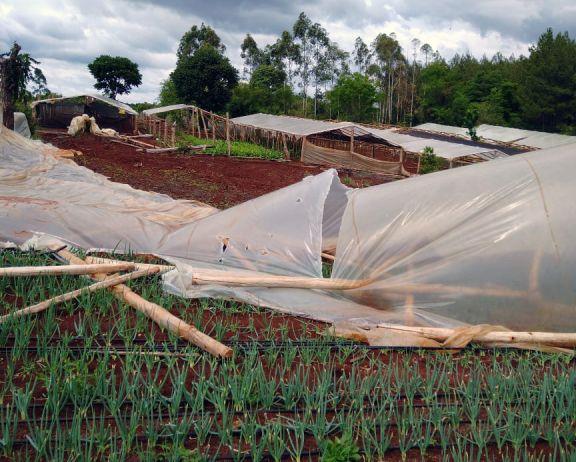 Graves daños en invernaderos de Gobernador Roca tras la tormenta