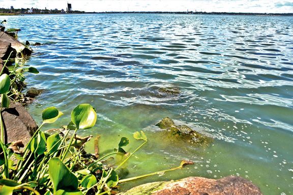 Se espera la presencia de cianobacterias todo el verano