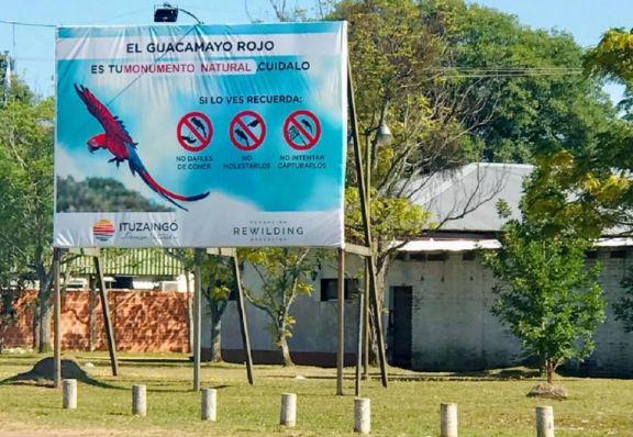 "Declararon al Guacamayo Rojo ""Monumento Natural Municipal"" de Ituzaingó"