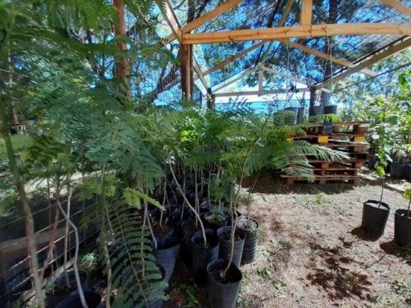 Con especies autóctonas, buscan repoblar de árboles Santo Tomé