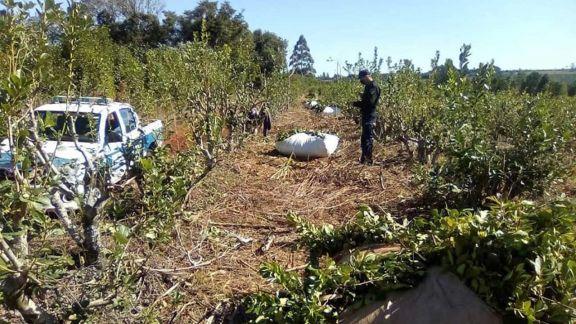 Crearán unidad especializada para combatir delitos rurales
