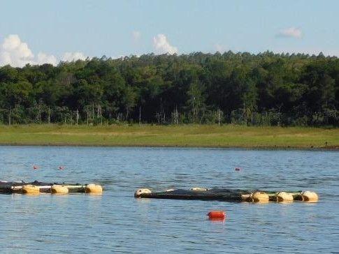 El municipio de Libertad cría peces en el lago Uruguaí